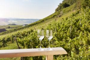 Weinurlaub Steiermark
