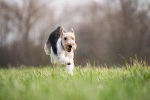 Urlaub mit Hund Steiermark