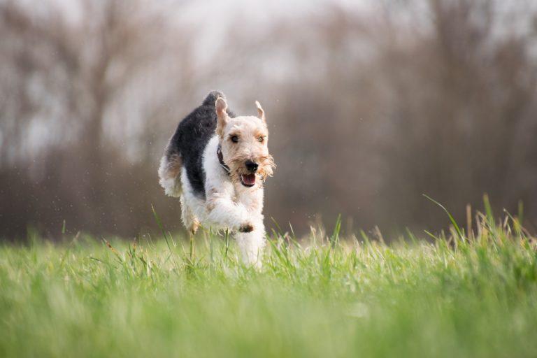 urlaub mit hund in radkersburg